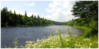 Spey Fsihing New Brunswick