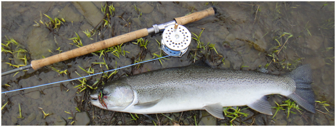 Steelhead Spey Fishing